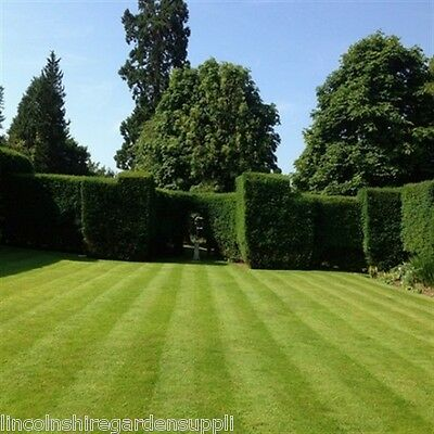 Grass Seed FINELAWN - This a Top Quality Front Lawn Mix (DEFRA Certified Seed)