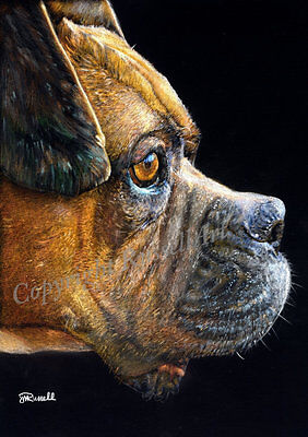 Portrait 2 A4 A3 A2 Boxer Dog Art Print of original pencil drawing by RussellArt