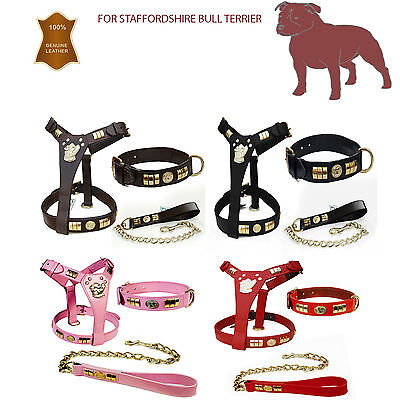 Staffordshire Staffy Bull Terrier Leather Dog Harness Collar & Lead Set Brass Df