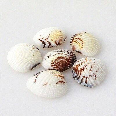 Pack 20 Natural Seashells Clams Shells Wedding Beach Fish Tank Crafts Decor