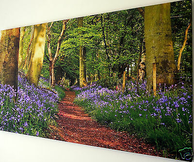"""Bluebell Woodland Path Wall Art Canvas  Print Large 18"""" X 32""""  Ready To Hang"""