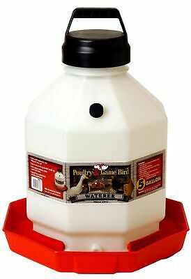 Pet Lodge PPF5 5 Gallon Red Plastic Poultry Waterer