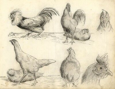 Rooster Bird Studies  - Original late 19th-century charcoal drawing
