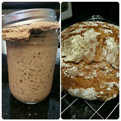 Old and mature Naturally Grown Organic Sourdough Bread Starter Express Shipping