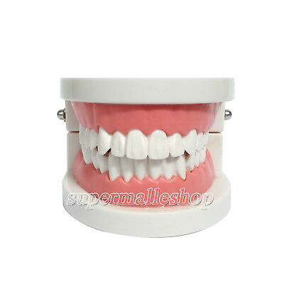 Dental Teach Study Adult Standard Typodont Demonstration Teeth Model Pink SUPER