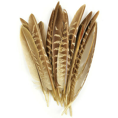 Pheasant Quill Feathers 18/Pkg Natural 38192