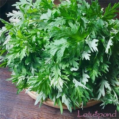 200pcs aromatic plant seeds aromatic blumea fragrant wormwood edible medicinal h