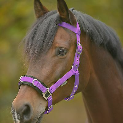 lunge cavesson ECONOMIC, Lunging rein, Lunging Halter, halter z lunging, purple