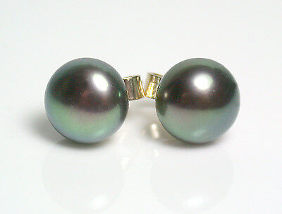 7.5mm AAA quality peacock black freshwater pearl & 9 carat gold earrings