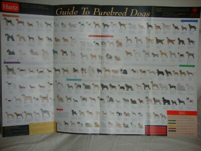 NEW Veterinary American Kennel Club AKC Dog Breed Guide to Purebred Poster
