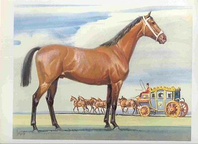 1962 CLEVELAND BAY Original Horse Print Sam Savitt -Best Offer