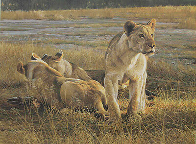 Robert Bateman Hand Signed Numbered Limited Edition LIons At Dawn