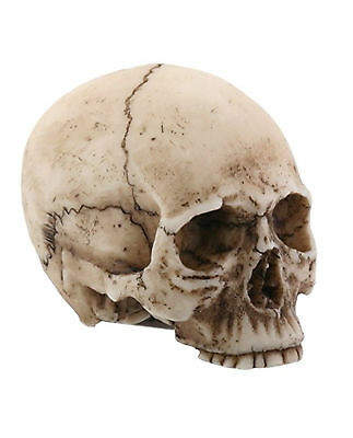 Small Resin Human Skull Replica Halloween Decoration Haunted House Gothic 2 Inch