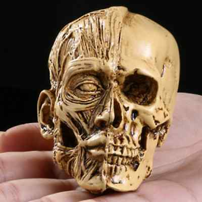 Homosapiens Skull Statue Figurine Human Head Skeleton Model Arts Decor