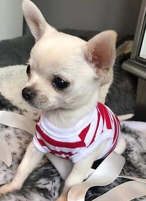 Chihuahua XX Small Tea Cup Puppy Kitten Size Dog Clothes Red & White Strips Top