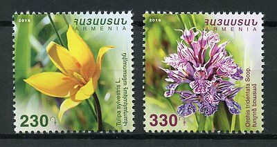 Armenia 2016 MNH Wild Flowers 2v Set Tulips Orchids Flora Stamps