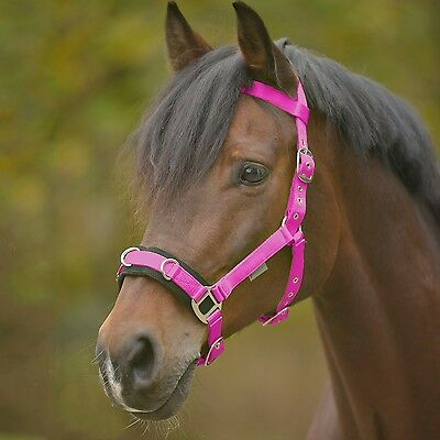 lunge cavesson ECONOMIC, Lunging rein, halter, z lunging, Floor work, pink