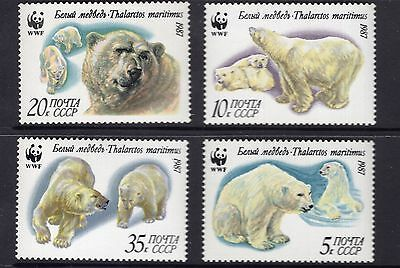 Russia Polar Bear group see scans by 2