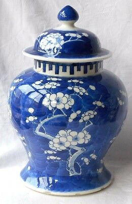 C19Th Chinese Blue And White Temple Jar And Cover In A Prunus Pattern
