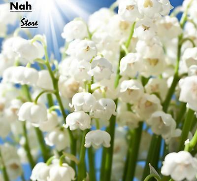 White Lily of the Valley Flower, Rich Aroma Bonsai Flower Seeds-100Pcs