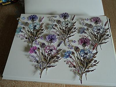 Tattered Lace Botanical Flourishing Flowers (New Release) Die Cuts X 10