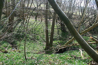 Plot of Woodland for sale Ticehurst East Sussex