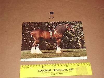 BUDWEISER BREWERY CLYDESDALE DRAFT HORSE HITCH GRANT'S FARM ST LOUIS Prize team