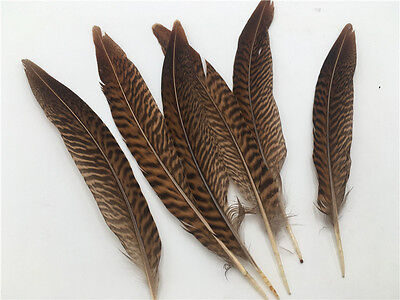 20X//Set Caragana Feathers Green Natural Feather 4-7cm Decor Making Feathers BSCA