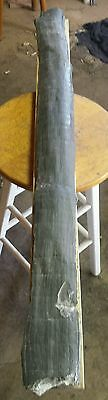 """Calamite fossil 40 1/2 inches long """" PETRIFIED WOOD """" HORSETAIL"""