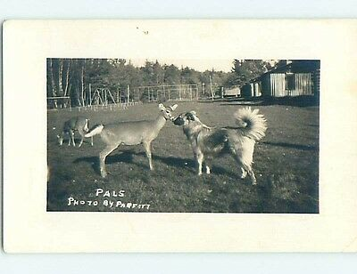 1943 rppc CUTE BABY DEER AND DOG NOSE TO NOSE Postmarked Eagle River WI HM2530
