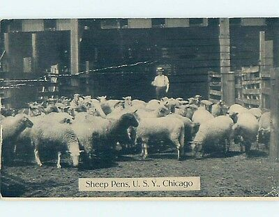 Bent Divided-Back SHEEP AT THE STOCKYARDS Chicago Illinois IL HM6904