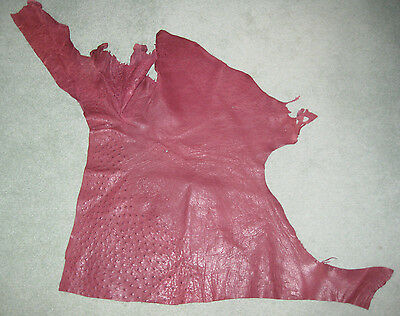 Ostrich Leather Cut Genuine From South Africa