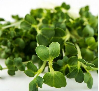 Broccoli Brassica Blend: Broccoli Raab, Radish, Mustard, Arugula Sprouting Seeds