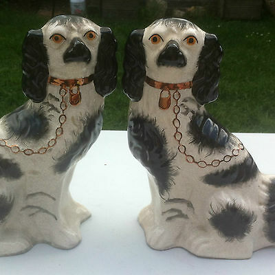 Vintage Pair Staffordshire Dogs Height 31Cm Made Kent White And Black Kent