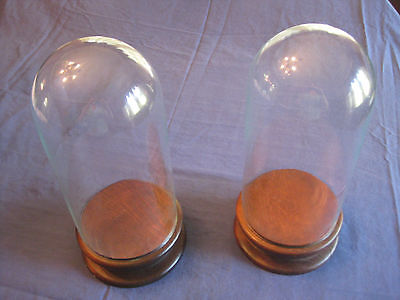 """PAIR of display cases, glass domes on wooden bases, Victorian, approx 13"""""""