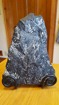 """Beautiful White Fern Fossil Plate 12""""x9""""x2"""", Llewellyn Formation, St.Clair, PA"""