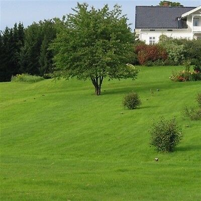 Tough Back Lawn Seed Mix  Enough To Cover 100 sq M  (A DEFRA Certified Seed Mix)