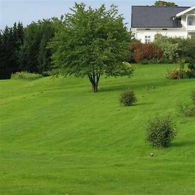 Tough Back Lawn Seed Mix  Enough To Cover 20 sq M  (A DEFRA Certified Seed Mix)