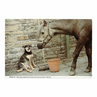 Pony & A Dog In The Stable Yard, Horses & Ponies Protection Association Postcard