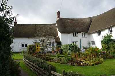 Gorgeous Thatched Holiday Cottage -  Devon  24 JUNE,  also JULY, AUG available