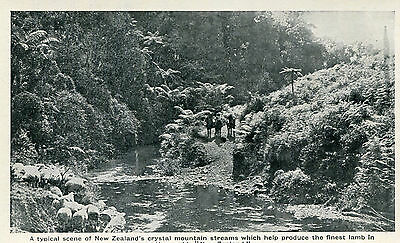 1930s postcard a Crystal Mountain Stream in New Zealand
