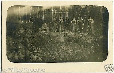 FARMERS DIGGING UP POTATO CROP 1900s REAL PHOTO POSTCARD