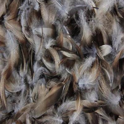 Grey Mallard Duck Feather Plumage Pack of 10 grams