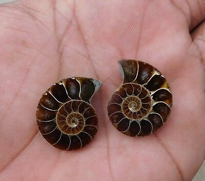 42.4 Cts Fab A+++ Marvelous 100% Natural  Ammonite Mix Cabochon Gemstone