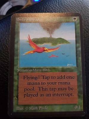 Near Mint MTG Magic the Gathering ALPHA Birds of Paradise