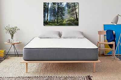 Forest Collection Nature Photography Canvas Print Art Decor Wall High Quality