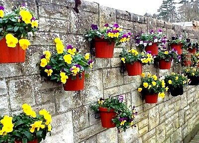 """Herb Garden 6 Plant Pot Holder Rings To Hang 7""""  Pots On Walls,fences & Sheds"""