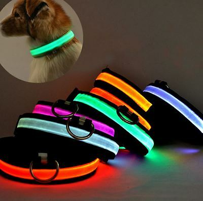 Dog Collar Led USB Rechargeable Light Safety Flashing Pet Waterproof up Nylon M