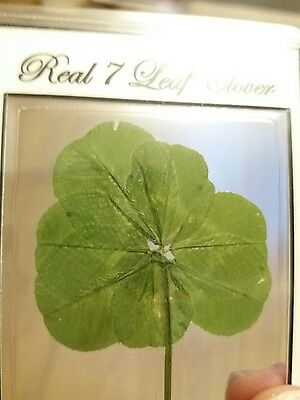Genuine real 7 leaf clover/4 leaf clover wallet/purse card lucky charm keepsake