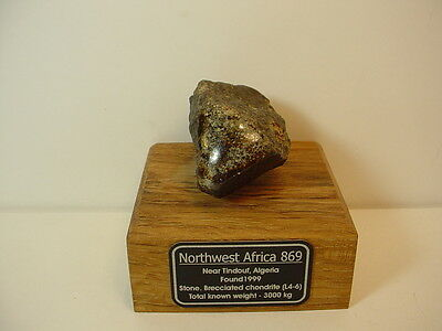NWA 869 Meteorite, Tindouf, Algeria, 73 grams with Wood Base, Label & Magnet